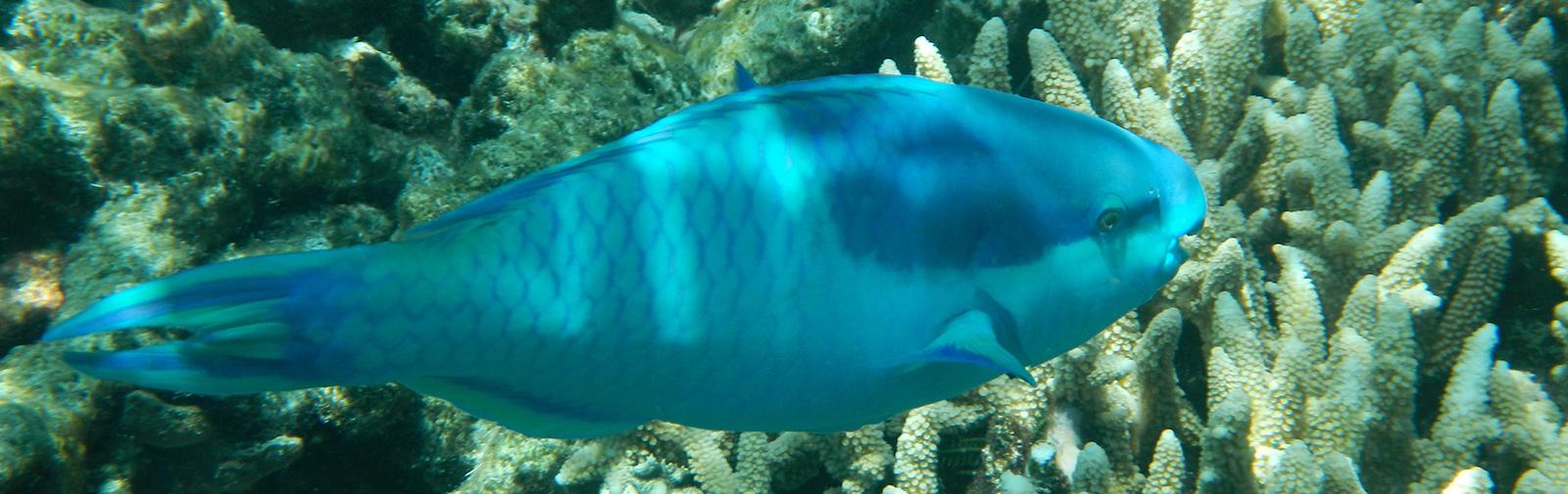 Australie - Grande barrière de corail